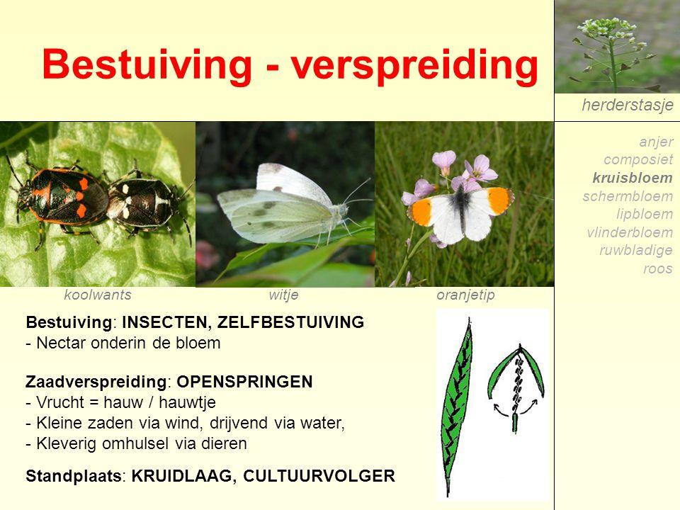 Bestuiving - verspreiding herderstasje Bestuiving: INSECTEN, ZELFBESTUIVING - Nectar onderin de bloem oranjetipwitjekoolwants anjer composiet kruisblo