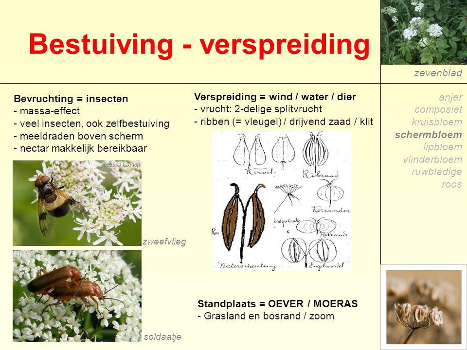 Bestuiving - verspreiding zevenblad Verspreiding = wind / water / dier - vrucht: 2-delige splitvrucht - ribben (= vleugel) / drijvend zaad / klit Bevr