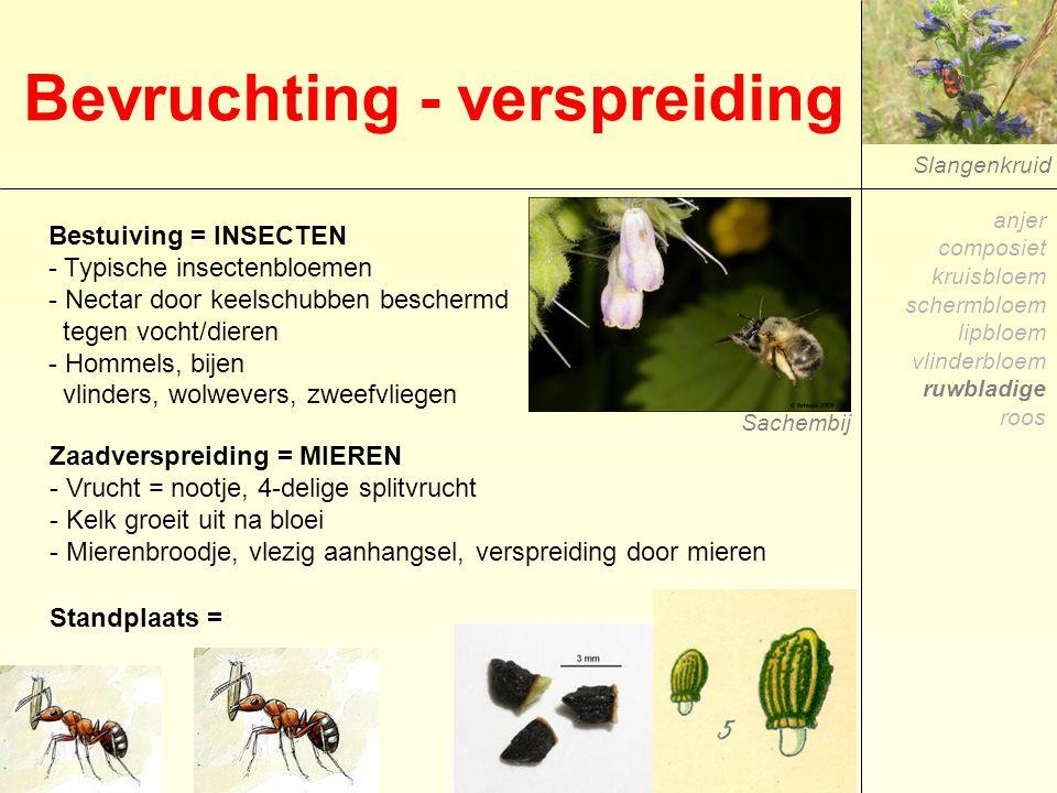 Slangenkruid Bevruchting - verspreiding Bestuiving = INSECTEN - Typische insectenbloemen - Nectar door keelschubben beschermd tegen vocht/dieren - Hom