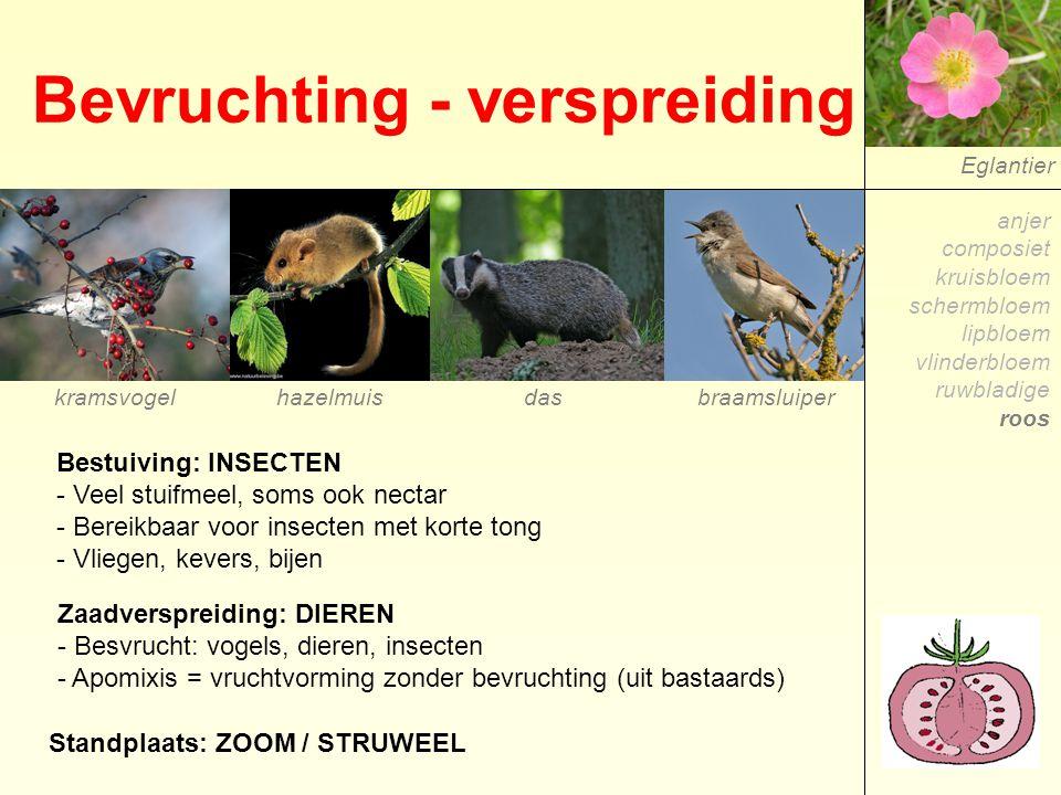Bevruchting - verspreiding Eglantier Bestuiving: INSECTEN - Veel stuifmeel, soms ook nectar - Bereikbaar voor insecten met korte tong - Vliegen, kever