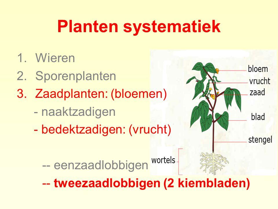 1.Wieren 2.Sporenplanten 3.Zaadplanten: (bloemen) - naaktzadigen - bedektzadigen: (vrucht) -- eenzaadlobbigen -- tweezaadlobbigen (2 kiembladen) Plant