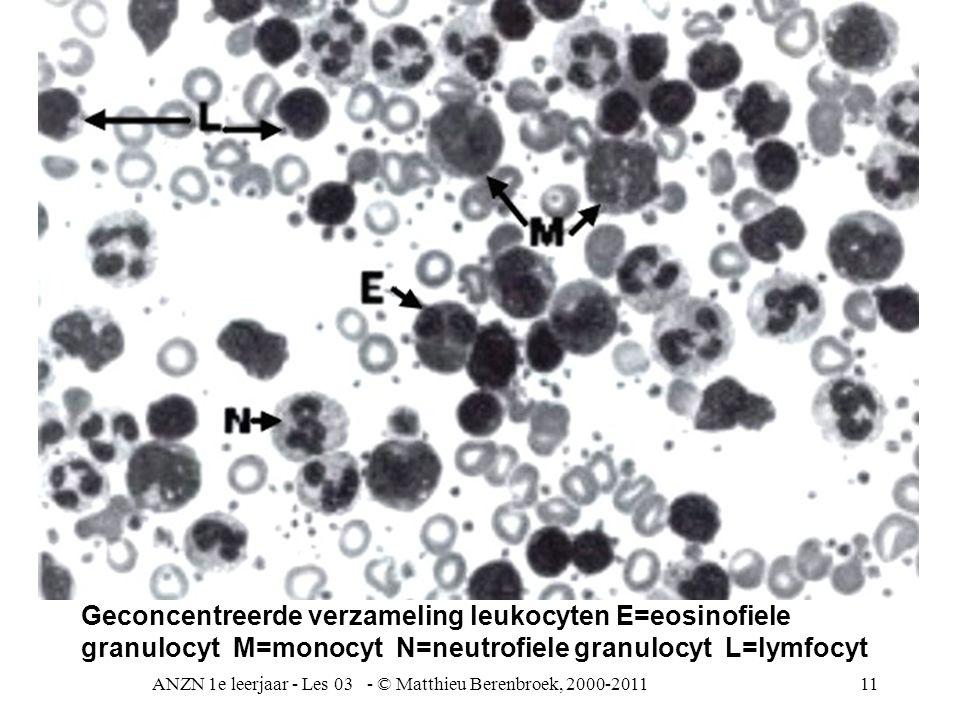 ANZN 1e leerjaar - Les 03 - © Matthieu Berenbroek, 2000-201111 Geconcentreerde verzameling leukocyten E=eosinofiele granulocyt M=monocyt N=neutrofiele