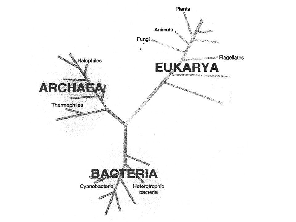 Archaea hebben grillige vormen