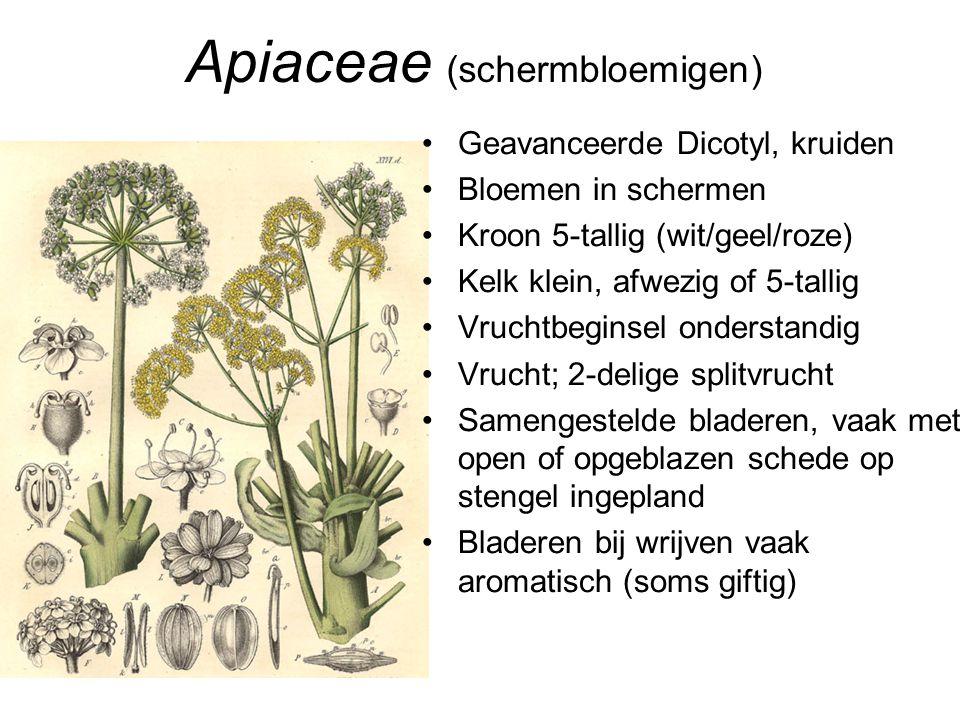 Apiaceae (schermbloemigen) •Geavanceerde Dicotyl, kruiden •Bloemen in schermen •Kroon 5-tallig (wit/geel/roze) •Kelk klein, afwezig of 5-tallig •Vruch