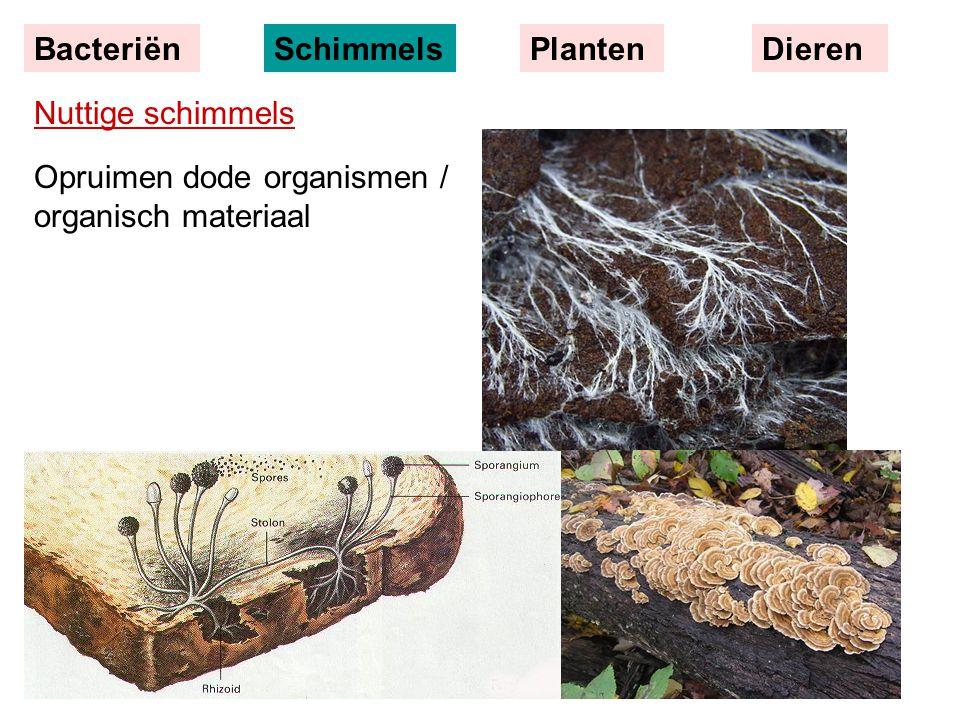 Nuttige schimmels Opruimen dode organismen / organisch materiaal BacteriënSchimmelsPlantenDieren