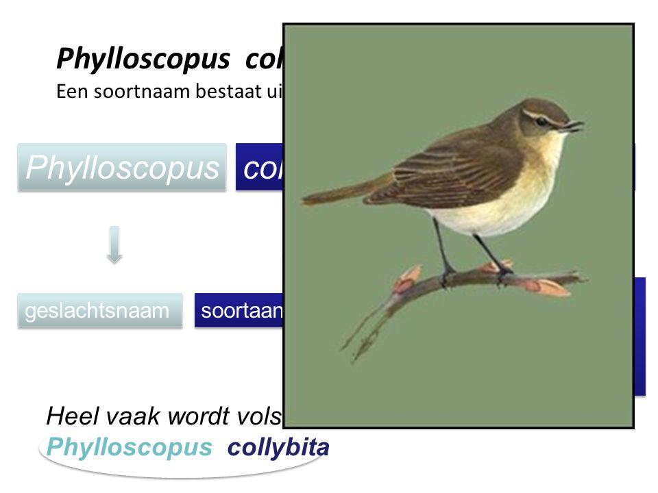 Phylloscopus collybita (Vieillot, 1817) Een soortnaam bestaat uit: Phylloscopus collybita (Vieillot, 1817) Het jaar waarin de soort voor het eerst is
