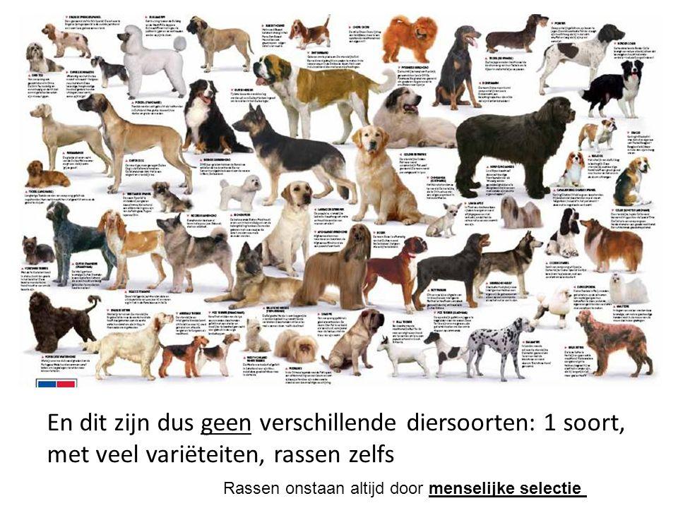 En dit zijn dus geen verschillende diersoorten: 1 soort, met veel variëteiten, rassen zelfs Rassen onstaan altijd door menselijke selectie