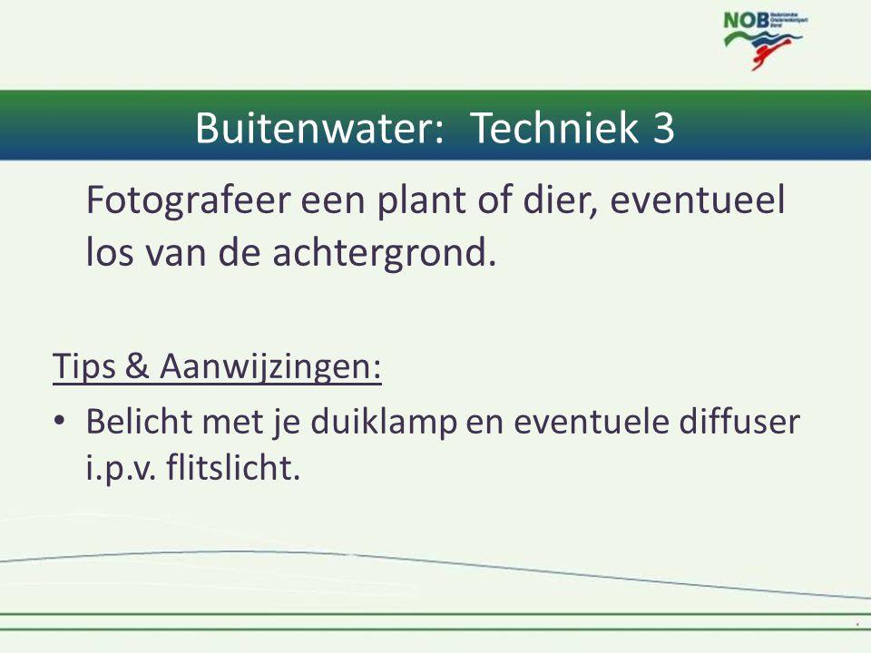 Buitenwater: Techniek 3 Fotografeer een plant of dier, eventueel los van de achtergrond. Tips & Aanwijzingen: • Belicht met je duiklamp en eventuele d
