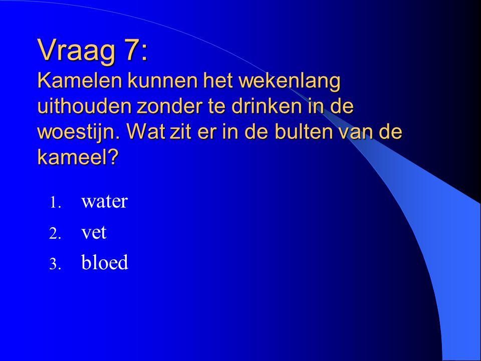 Vraag 7: Kamelen kunnen het wekenlang uithouden zonder te drinken in de woestijn. Wat zit er in de bulten van de kameel? 1. water 2. vet 3. bloed
