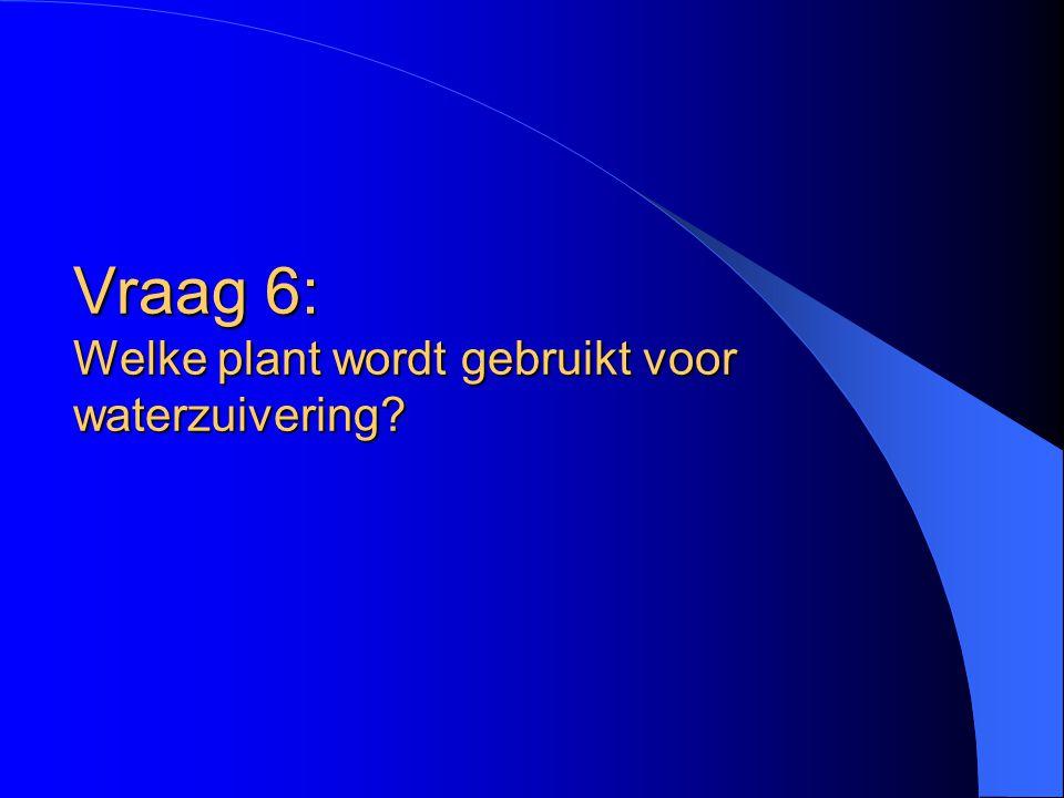 Vraag 6: Welke plant wordt gebruikt voor waterzuivering?