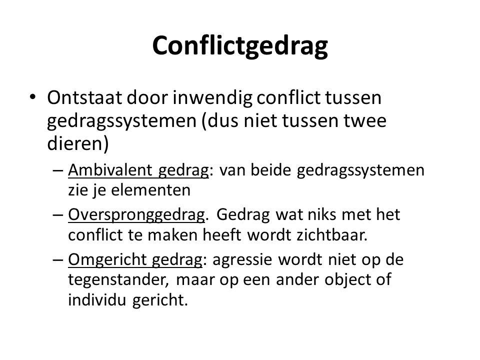 Conflictgedrag • Ontstaat door inwendig conflict tussen gedragssystemen (dus niet tussen twee dieren) – Ambivalent gedrag: van beide gedragssystemen z