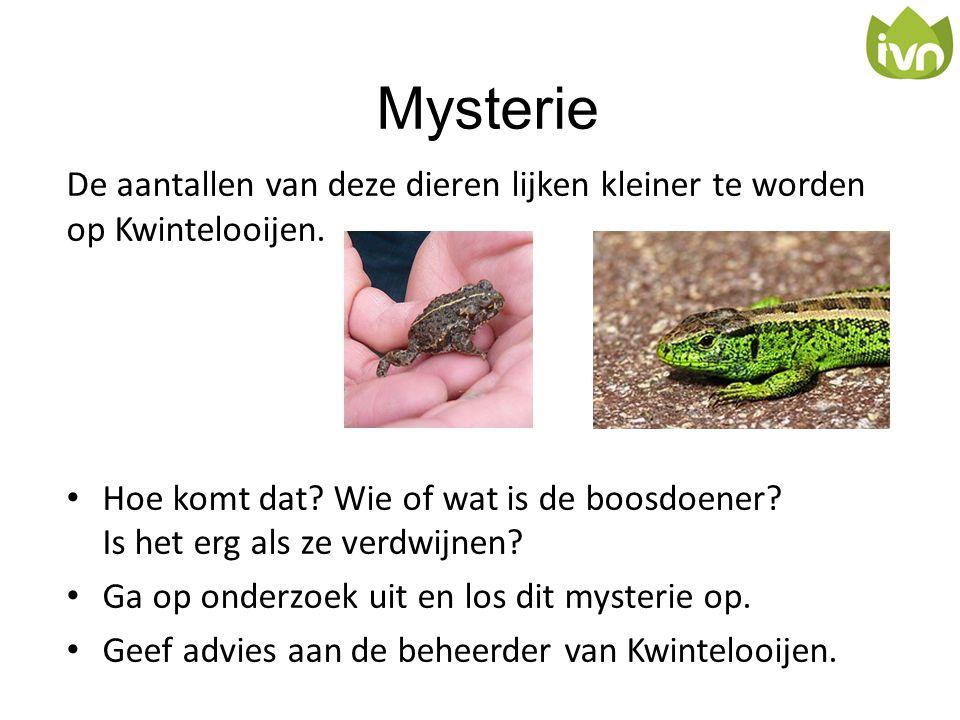Mysterie De aantallen van deze dieren lijken kleiner te worden op Kwintelooijen. • Hoe komt dat? Wie of wat is de boosdoener? Is het erg als ze verdwi