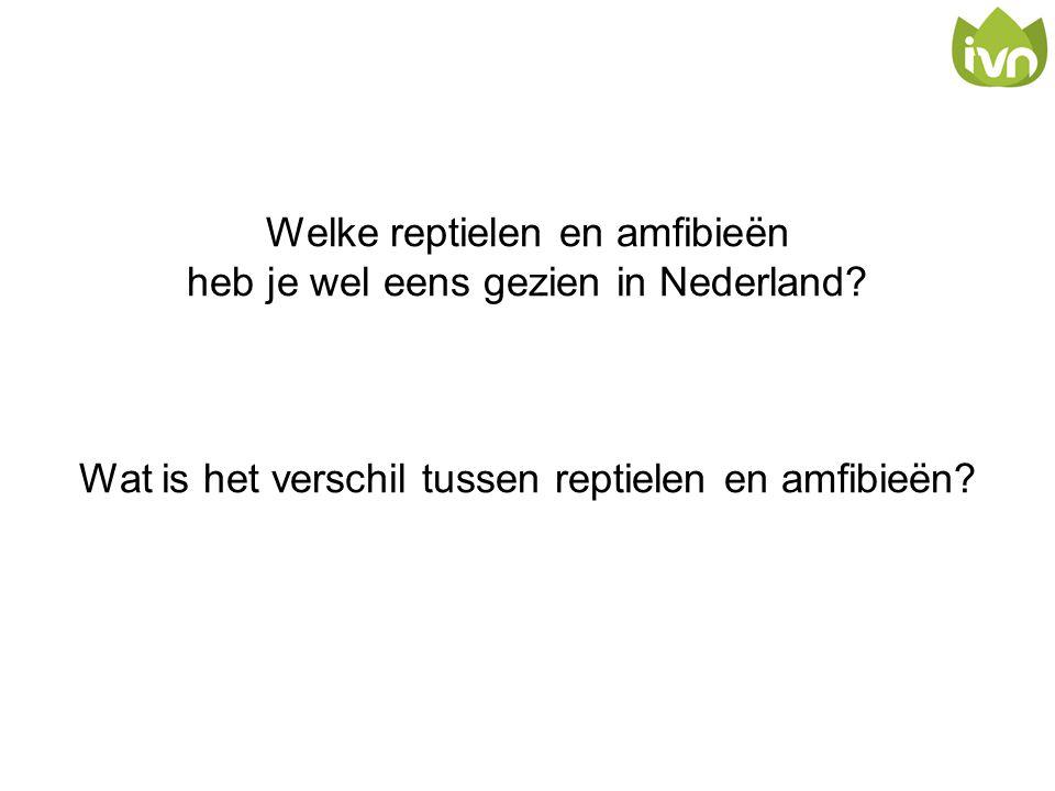 Welke reptielen en amfibieën heb je wel eens gezien in Nederland? Wat is het verschil tussen reptielen en amfibieën?