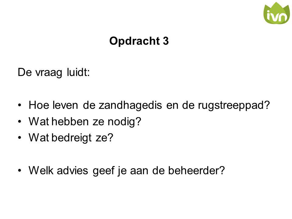 Opdracht 3 De vraag luidt: •Hoe leven de zandhagedis en de rugstreeppad? •Wat hebben ze nodig? •Wat bedreigt ze? •Welk advies geef je aan de beheerder
