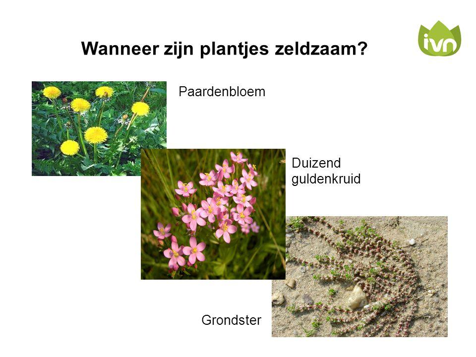 Wanneer zijn plantjes zeldzaam? Paardenbloem Duizend guldenkruid Grondster