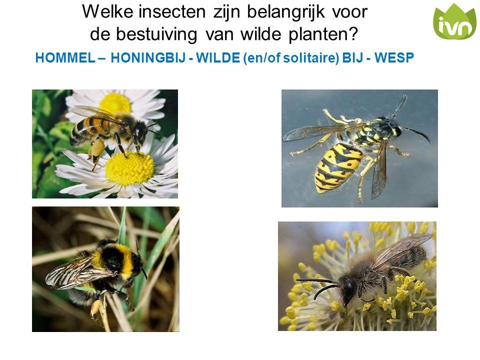Welke insecten zijn belangrijk voor de bestuiving van wilde planten? HOMMEL – HONINGBIJ - WILDE (en/of solitaire) BIJ - WESP