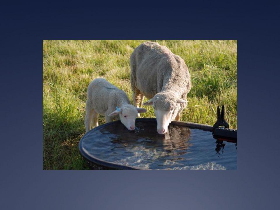 Zwangere werkelijkheid Spreuken 23:7 For as a man thinks in his heart so is he … Het proces van 'worden' in schepping:  Er gebeurt iets in je als je het ziet  Als je het ziet ga je er over spreken  Als je er veel over spreekt, ga je je zo gedragen  Gen.30: gespikkeld en gestreept vee