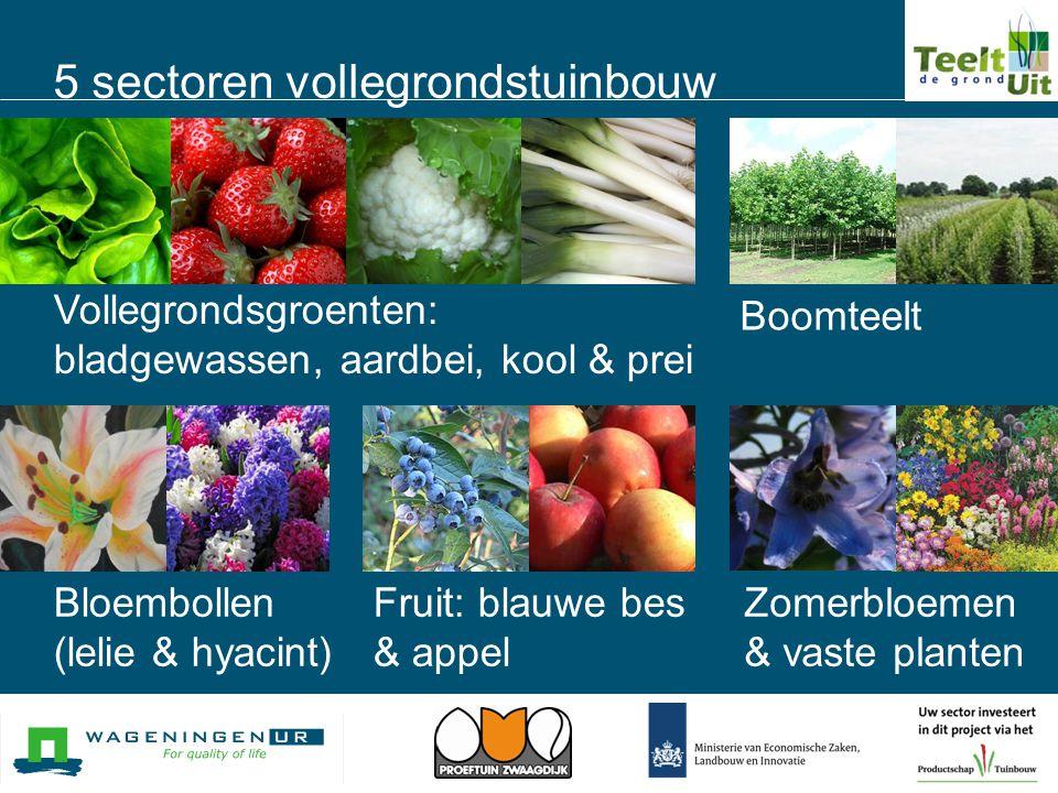 5 sectoren vollegrondstuinbouw Vollegrondsgroenten: bladgewassen, aardbei, kool & prei Boomteelt Bloembollen (lelie & hyacint) Fruit: blauwe bes & app