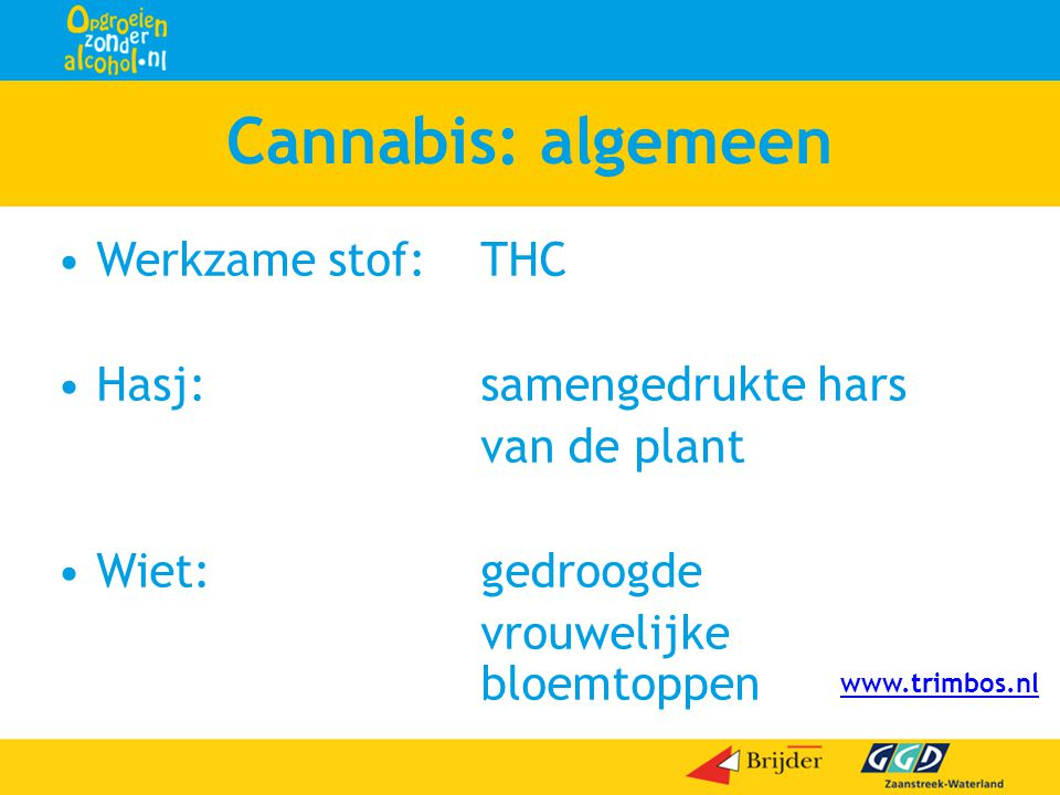 Cannabis: algemeen •Werkzame stof:THC •Hasj:samengedrukte hars van de plant •Wiet:gedroogde vrouwelijke bloemtoppen www.trimbos.nl