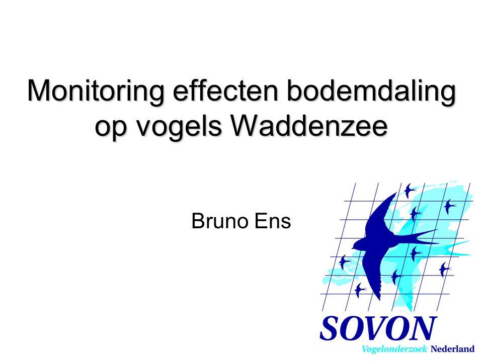 Monitoring effecten bodemdaling op vogels Waddenzee Bruno Ens