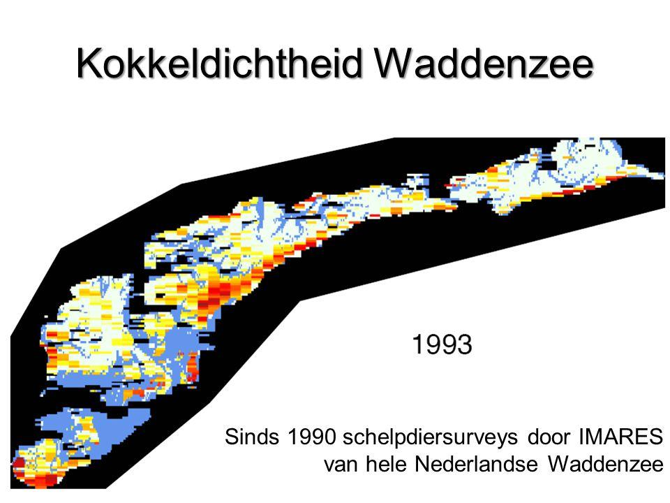 Kokkeldichtheid Waddenzee Sinds 1990 schelpdiersurveys door IMARES van hele Nederlandse Waddenzee