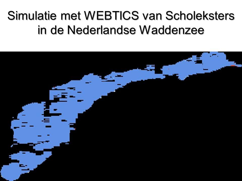 Simulatie met WEBTICS van Scholeksters in de Nederlandse Waddenzee
