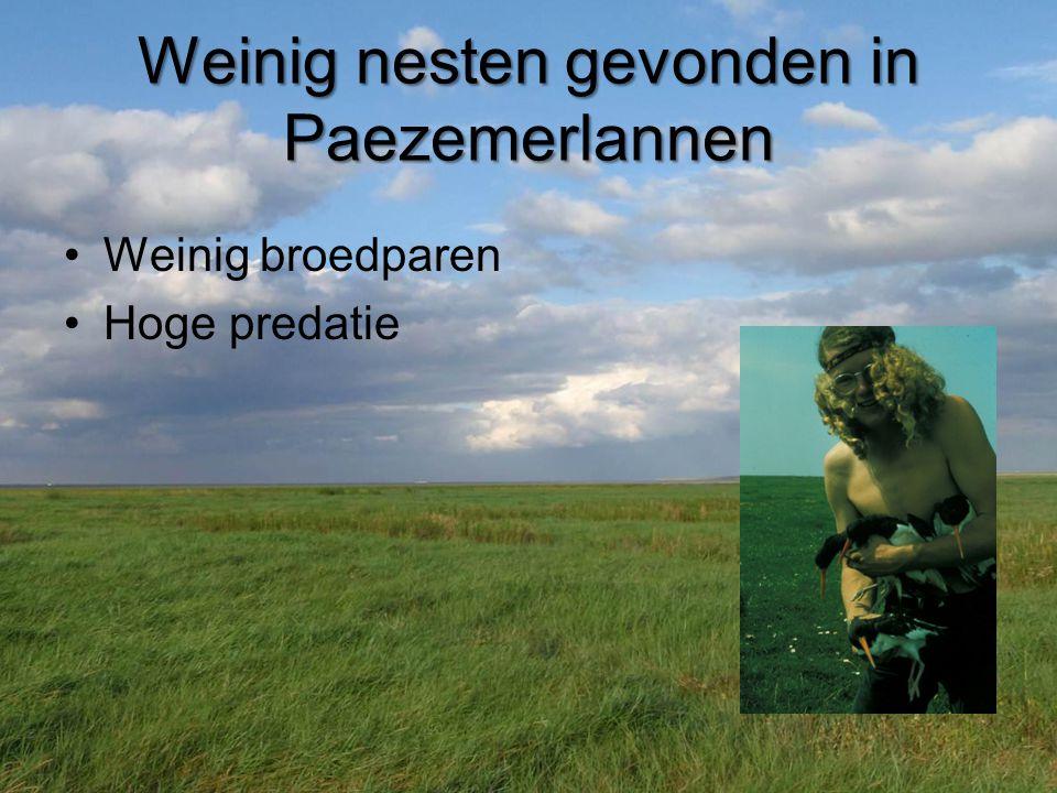 Weinig nesten gevonden in Paezemerlannen •Weinig broedparen •Hoge predatie
