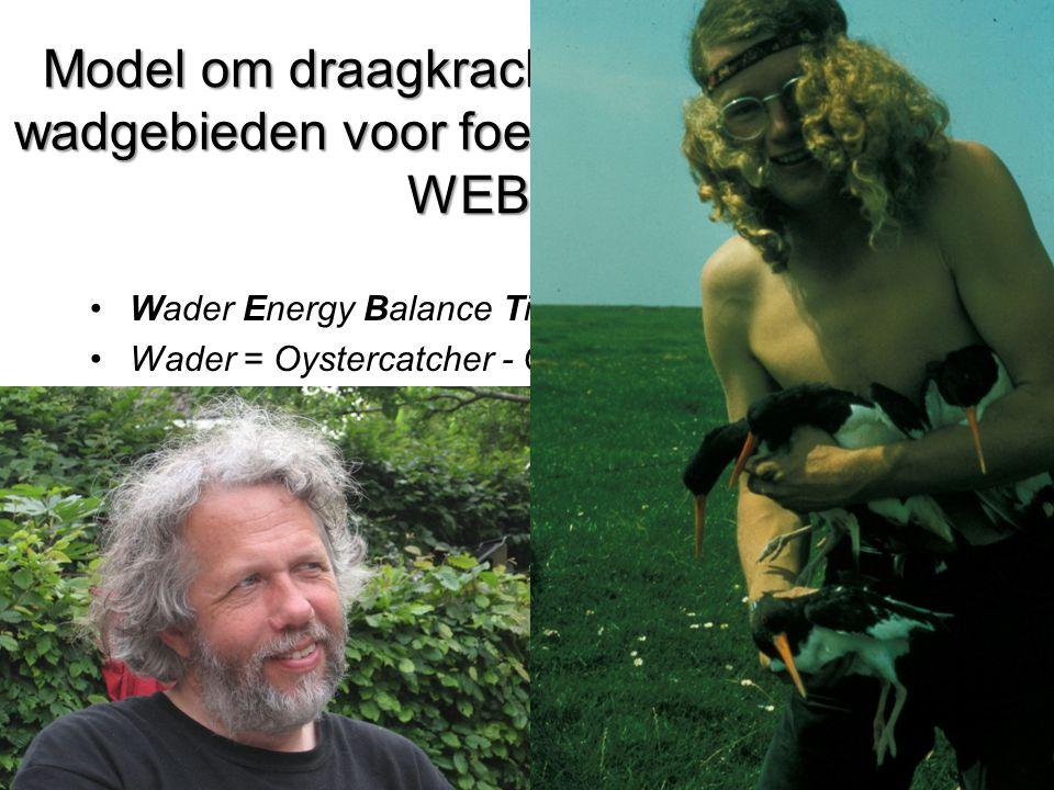 Model om draagkracht te voorspellen van wadgebieden voor foeragerende steltlopers: WEBTICS •Wader Energy Balance Tidal Cycle Simulator •Wader = Oystercatcher - OEBTICS