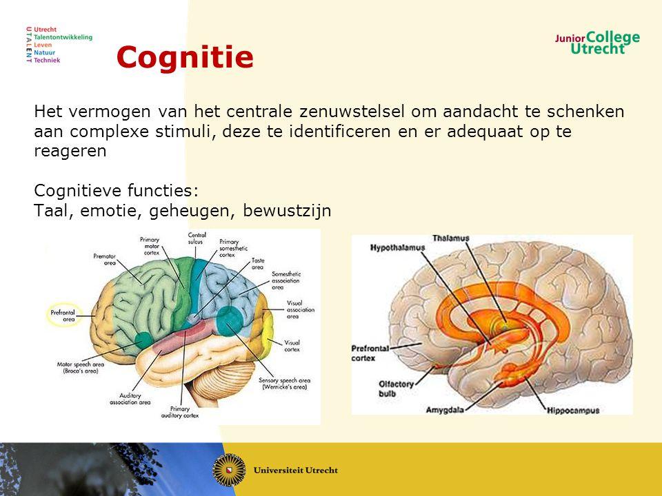 Cognitie Het vermogen van het centrale zenuwstelsel om aandacht te schenken aan complexe stimuli, deze te identificeren en er adequaat op te reageren