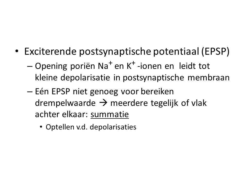 • Exciterende postsynaptische potentiaal (EPSP) – Opening poriën Na + en K + -ionen en leidt tot kleine depolarisatie in postsynaptische membraan – Eén EPSP niet genoeg voor bereiken drempelwaarde  meerdere tegelijk of vlak achter elkaar: summatie • Optellen v.d.