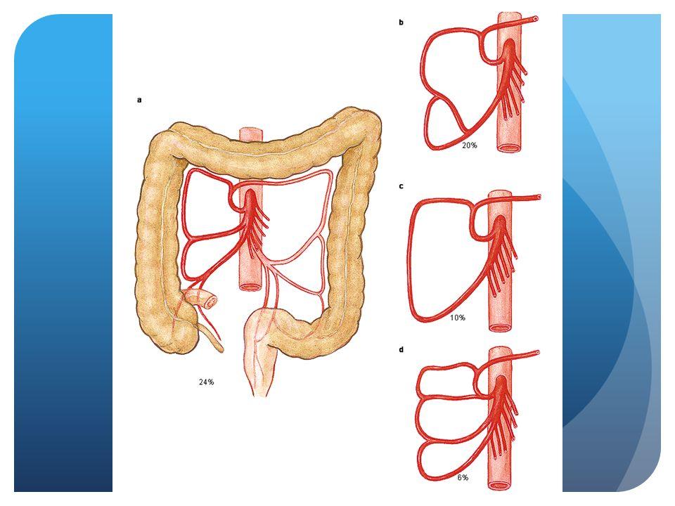 Dubbelloops colostoma  Rectumcarcinoom, pre-operatieve radiotherapie  Ontlastend, soms tijdelijk  Oude patient waarbij resectie niet mogelijk is