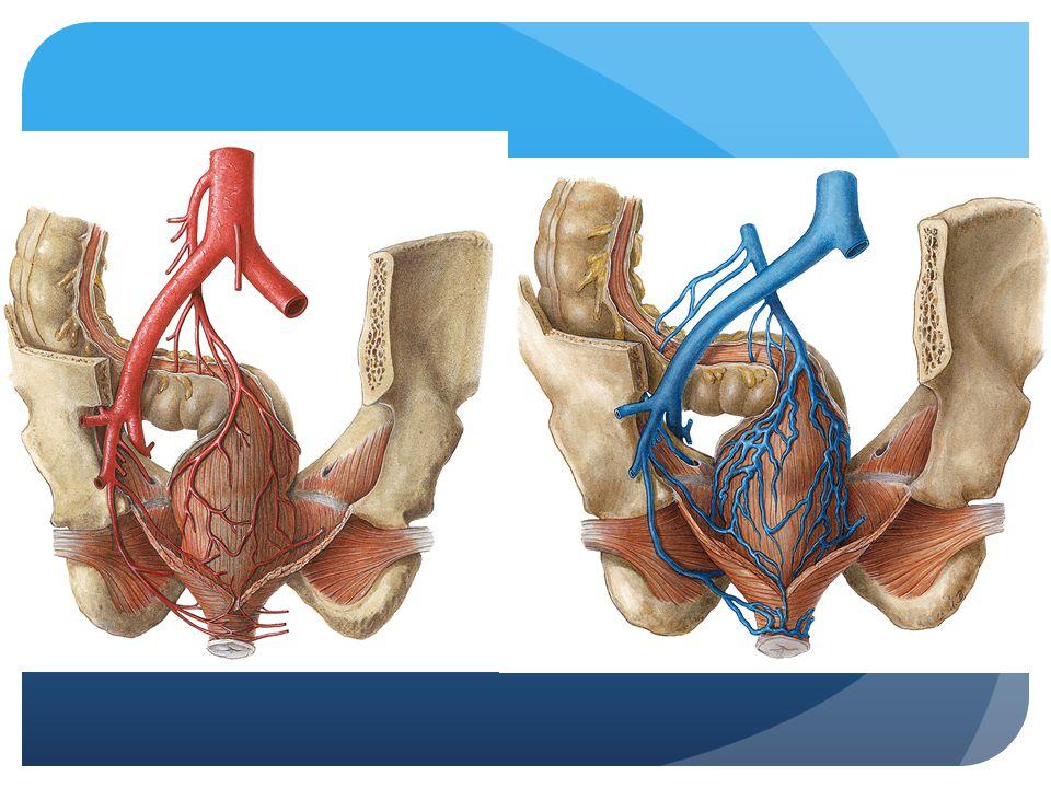 Indicaties  Dikke darmkanker  Diverticulose  Ziekte van Crohn, Colitis Ulcerosa