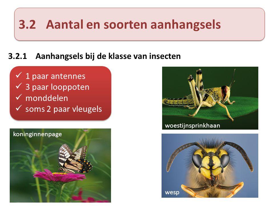 3.2Aantal en soorten aanhangsels 3.2.1Aanhangsels bij de klasse van insecten  1 paar antennes  3 paar looppoten  monddelen  soms 2 paar vleugels 
