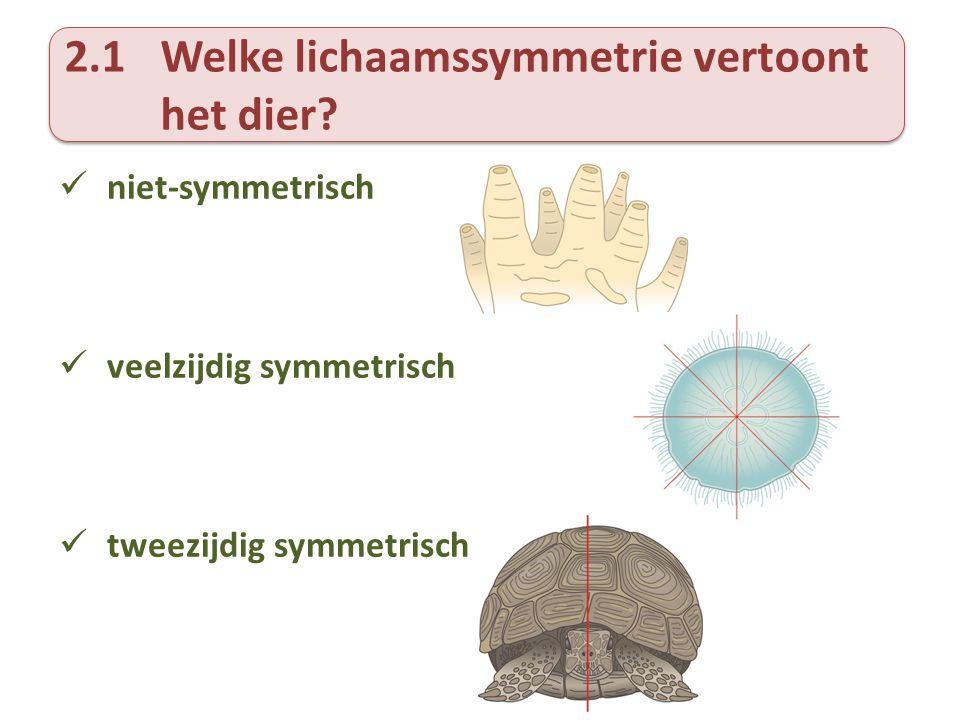 2.1Welke lichaamssymmetrie vertoont het dier?  niet-symmetrisch  veelzijdig symmetrisch  tweezijdig symmetrisch