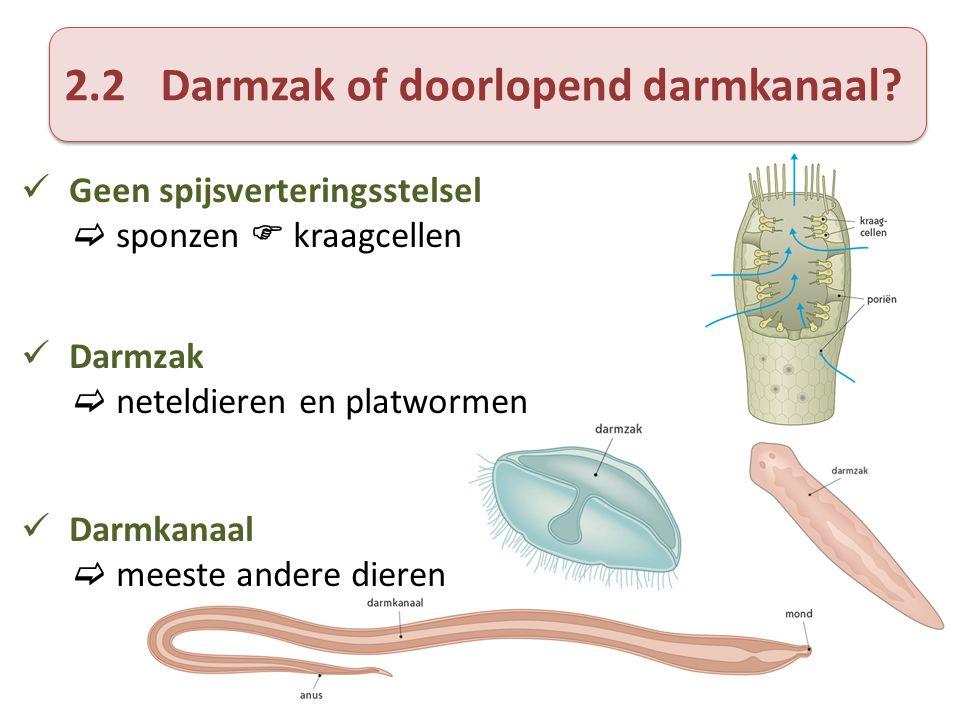 2.2Darmzak of doorlopend darmkanaal?  Geen spijsverteringsstelsel  sponzen  kraagcellen  Darmzak  neteldieren en platwormen  Darmkanaal  meeste