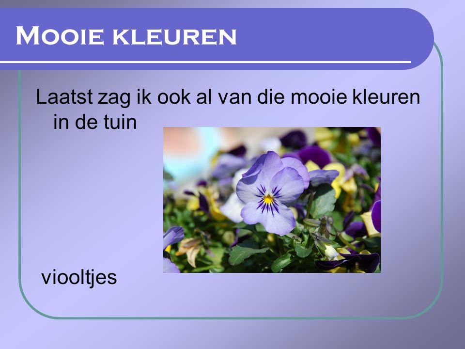 Mooie kleuren Laatst zag ik ook al van die mooie kleuren in de tuin viooltjes