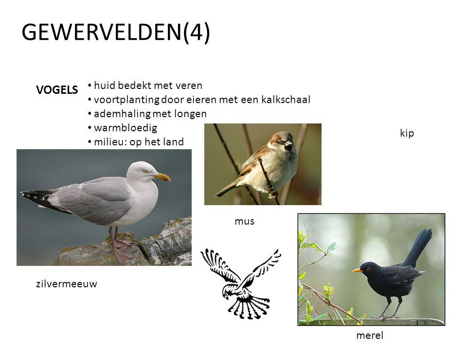 GEWERVELDEN(4) VOGELS • huid bedekt met veren • voortplanting door eieren met een kalkschaal • ademhaling met longen • warmbloedig • milieu: op het la