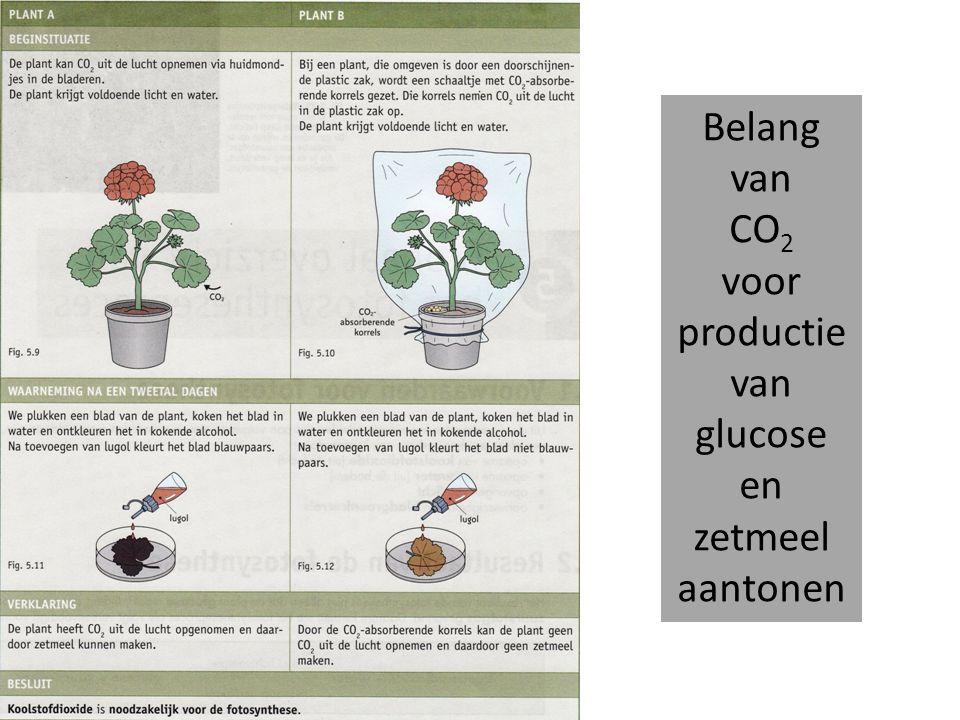 Belang van CO 2 voor productie van glucose en zetmeel aantonen