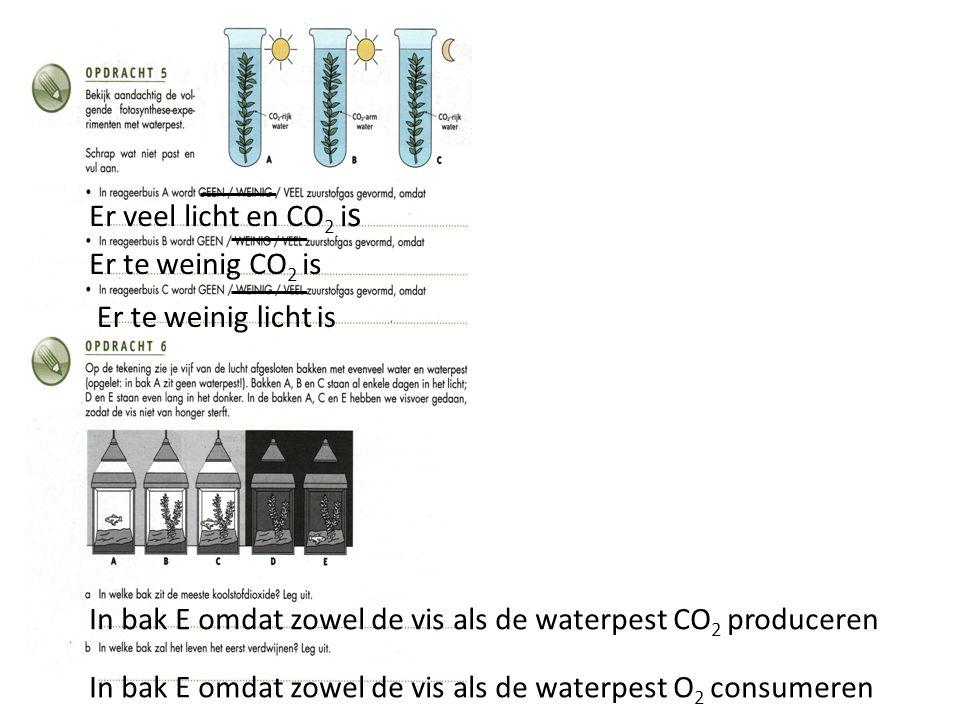 Er veel licht en CO 2 i s Er te weinig CO 2 is Er te weinig licht is In bak E omdat zowel de vis als de waterpest CO 2 produceren In bak E omdat zowel