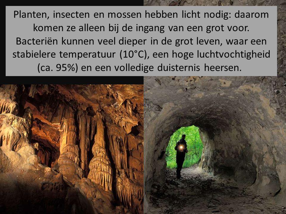 Planten, insecten en mossen hebben licht nodig: daarom komen ze alleen bij de ingang van een grot voor. Bacteriën kunnen veel dieper in de grot leven,