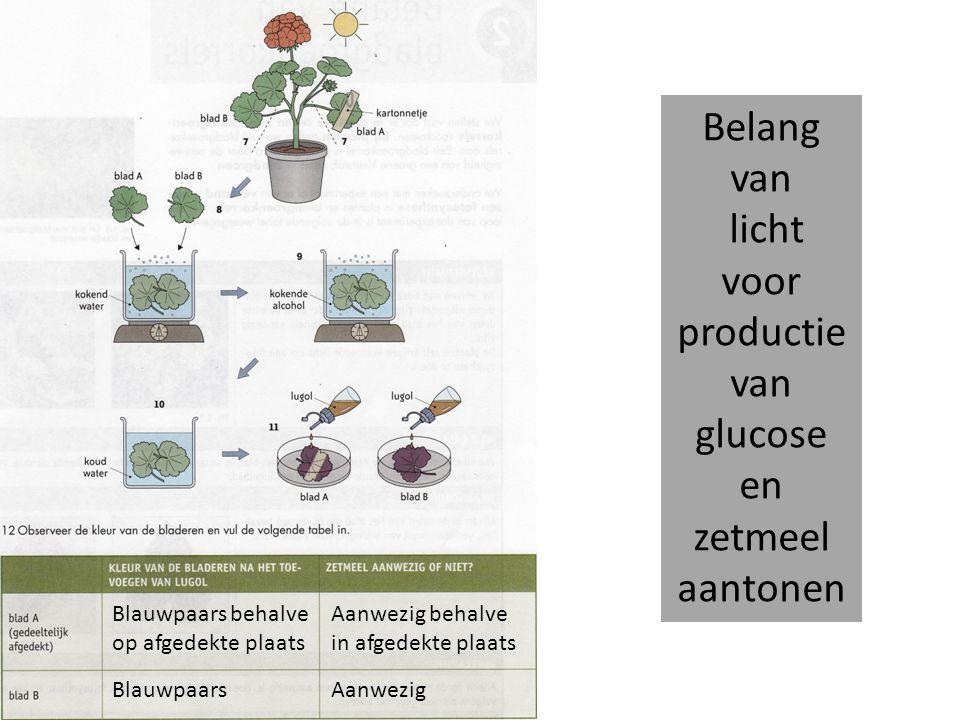 Belang van bladgroen voor productie van glucose en zetmeel aantonen Bladgroenkorrels in cellen van waterpest In dierlijke cellen nooit bladgroen