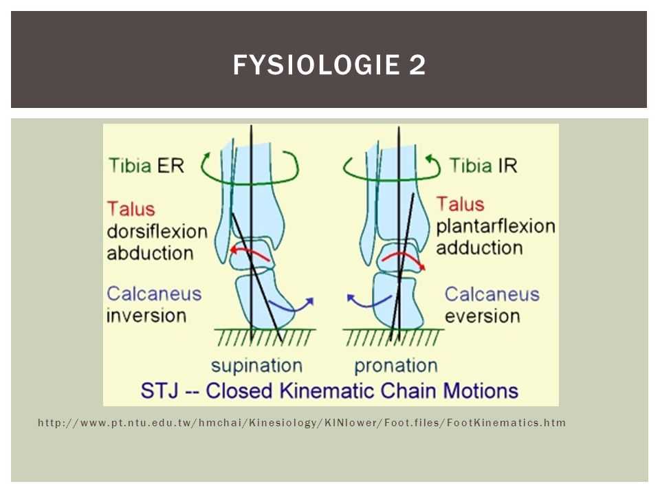 http://www.pt.ntu.edu.tw/hmchai/Kinesiology/KINlower/Foot.files/FootKinematics.htm FYSIOLOGIE 2