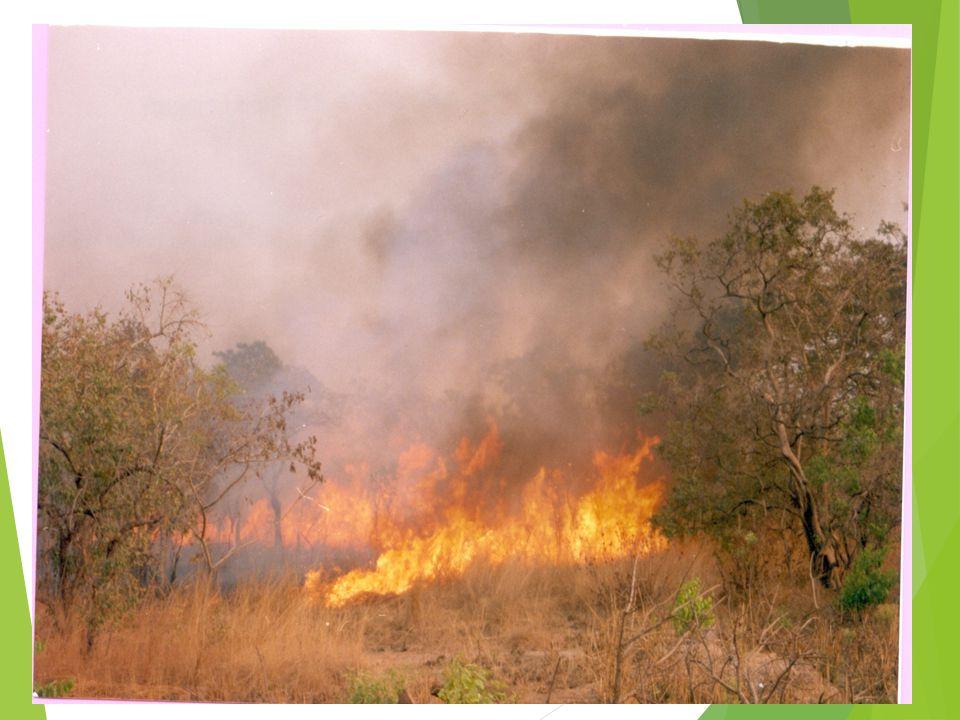 WILD FIRES 15