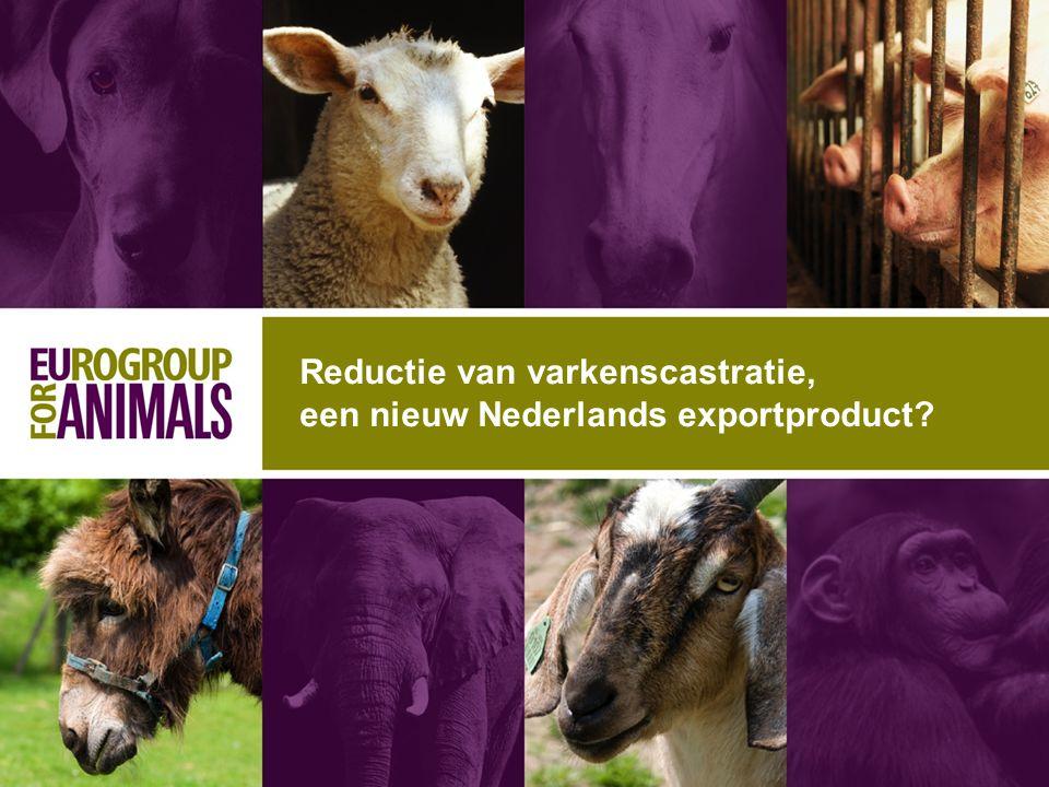 Reductie van varkenscastratie, een nieuw Nederlands exportproduct