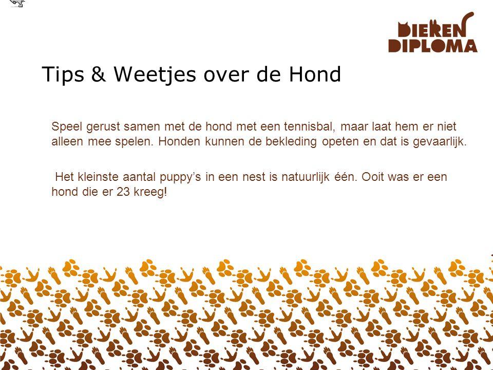 30. Theorie over de Hond Vanaf 2011 moeten alle honden in Nederland verplicht een chip hebben. De chip is een klein buisje met een nummer en komt onde