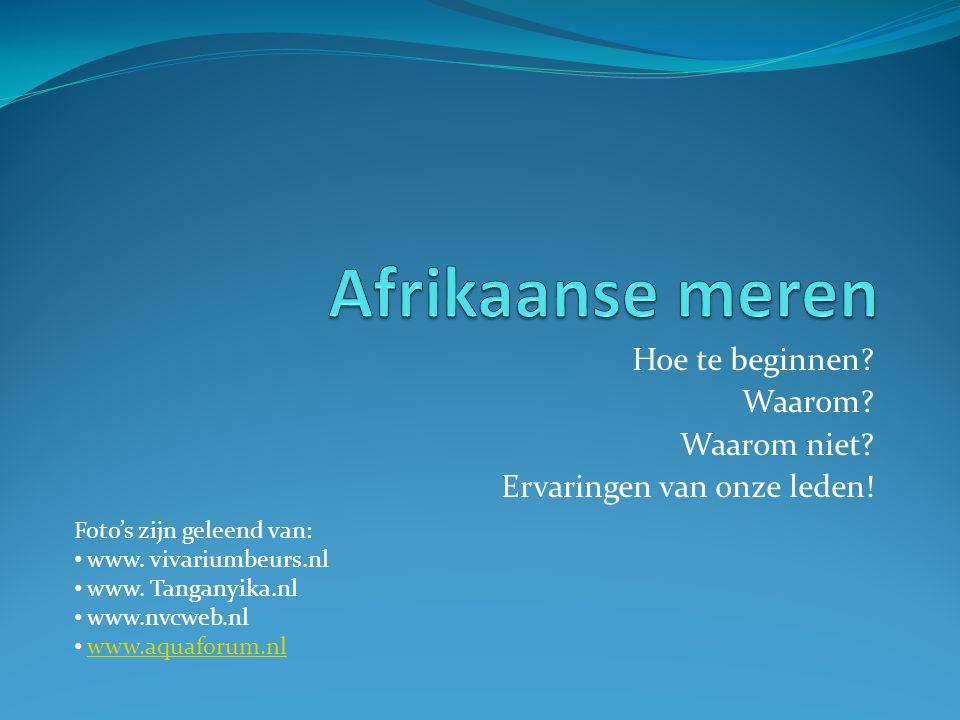 Hoe te beginnen? Waarom? Waarom niet? Ervaringen van onze leden! Foto's zijn geleend van: • www. vivariumbeurs.nl • www. Tanganyika.nl • www.nvcweb.nl
