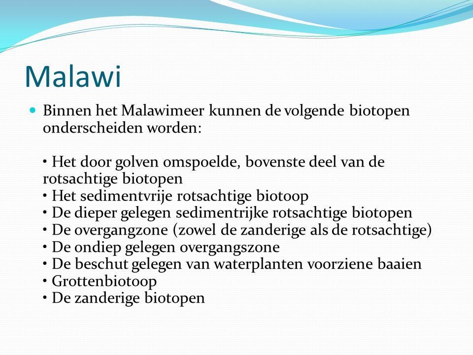  Binnen het Malawimeer kunnen de volgende biotopen onderscheiden worden: • Het door golven omspoelde, bovenste deel van de rotsachtige biotopen • Het