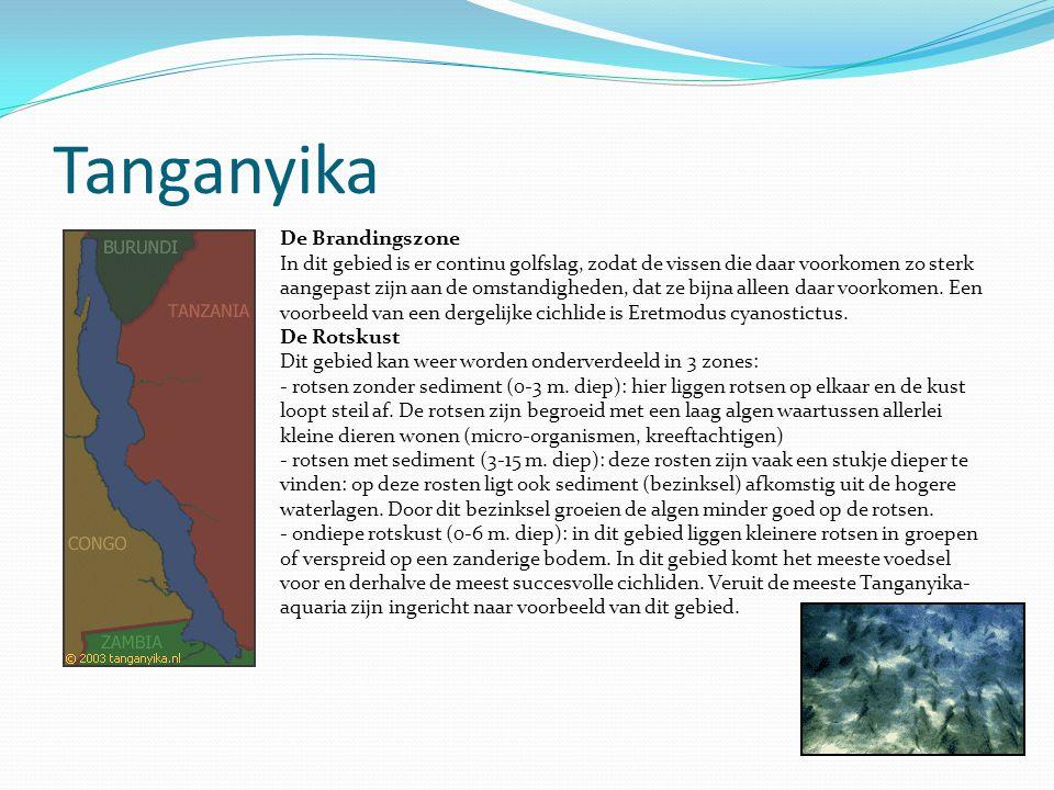 Tanganyika De Brandingszone In dit gebied is er continu golfslag, zodat de vissen die daar voorkomen zo sterk aangepast zijn aan de omstandigheden, da