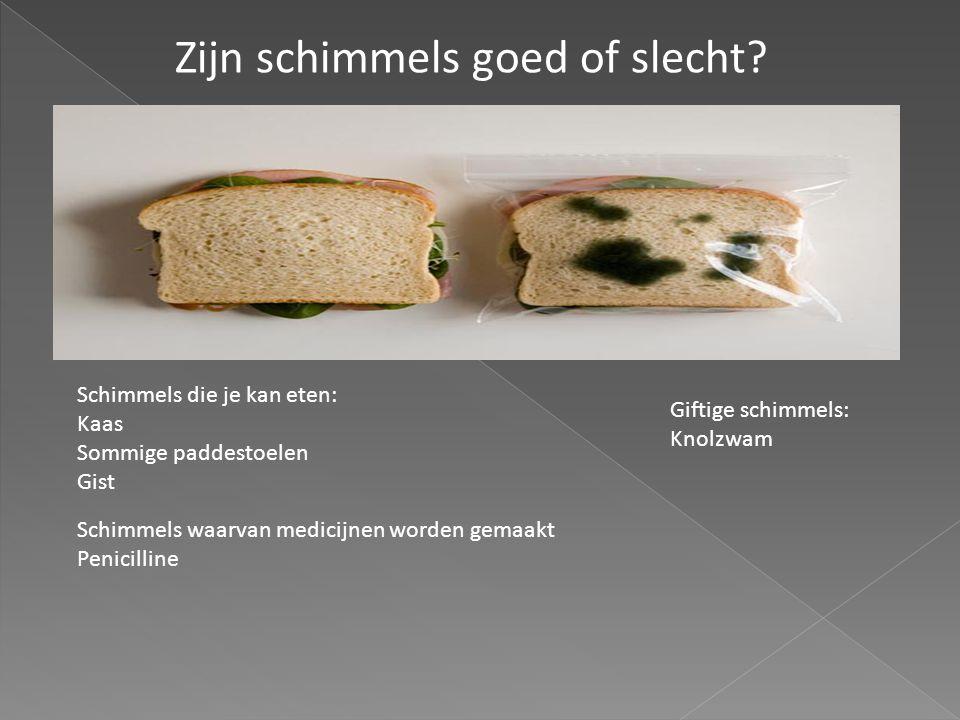 Zijn schimmels goed of slecht? Schimmels die je kan eten: Kaas Sommige paddestoelen Gist Schimmels waarvan medicijnen worden gemaakt Penicilline Gifti