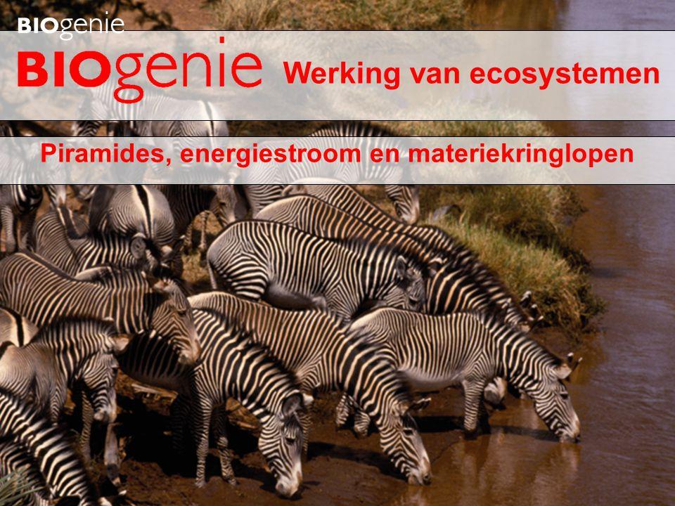 Piramides, energiestroom en materiekringlopen Werking van ecosystemen